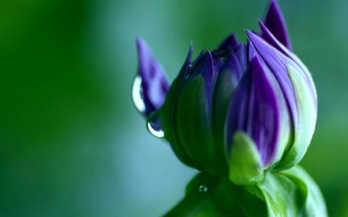 broto flor