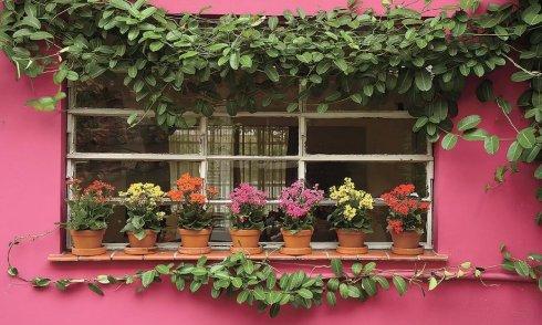 flores na janela casa e jardim